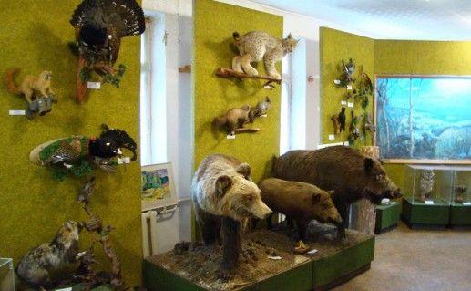 экспонаты в Челябинском музее леса фото