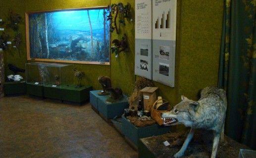 Челябинский музей леса фотография