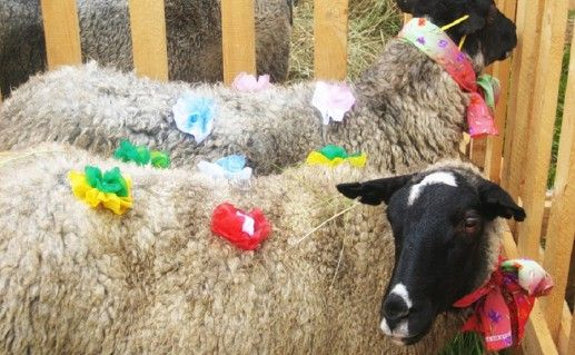 фотография музея романовской овцы в Тутаеве
