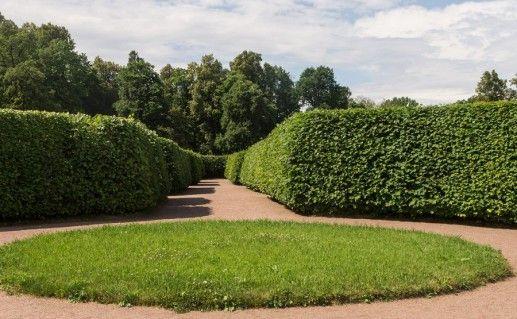 Нижний сад в Ораниенбауме фотография