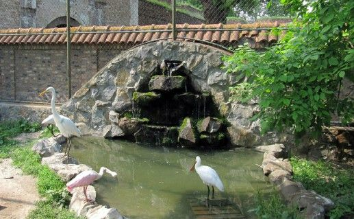 Белградский зоопарк фотография