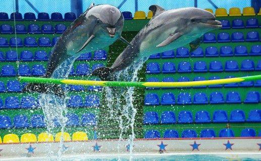 Фото дельфинарий «Акватория» в Адлере