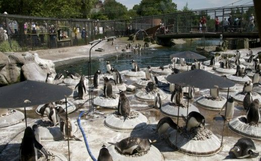Эдинбургский зоопарк фото