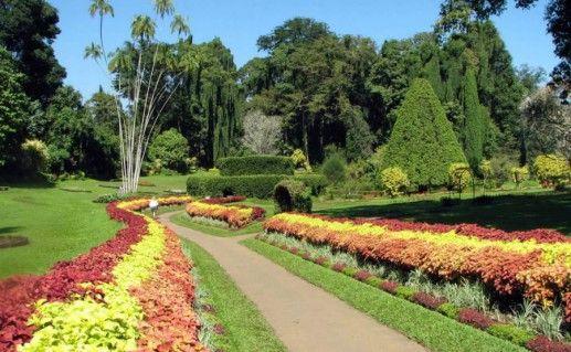 Королевский ботанический сад фото