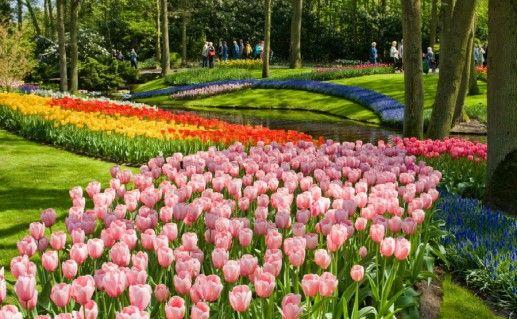 Фото парк Кекенхоф (Сад Европы) в Лиссе