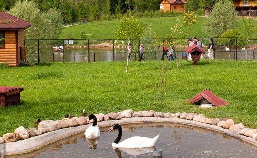 Парк птиц «Воробьи» в Калужской области фото