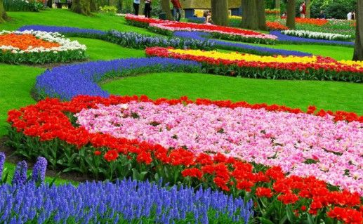 Сад Кёкенхоф фото