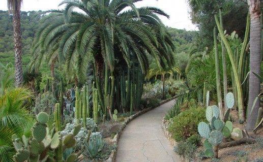 фото ботанического сада Пинья де Роса в Ллорет-де-Мар
