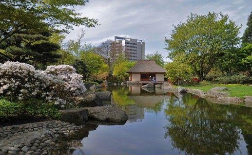 гамбургский ботанический сад фотография
