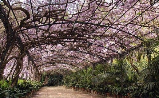 малагский ботанический сад фотография