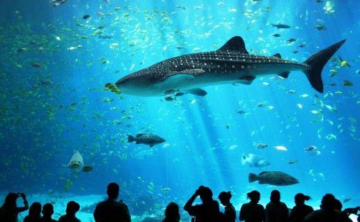 фотография океанариума Владивостока