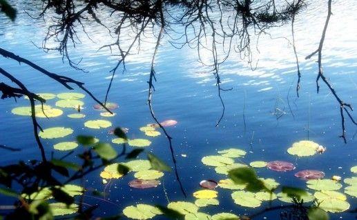 Фотография озера Лотос