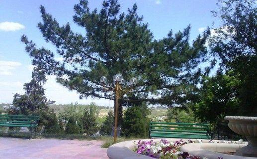 фото дендропарка в Шымкенте
