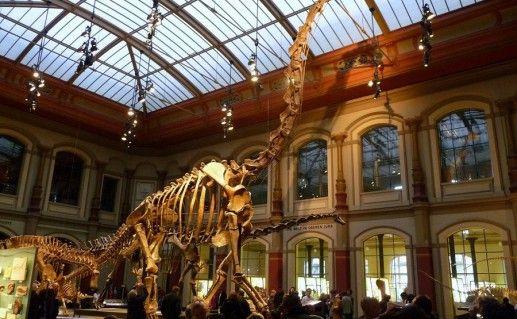 фото экспонатов берлинского музея естественной истории