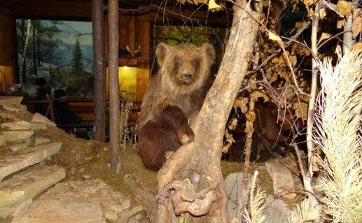 фото экспонатов музея леса в Уфе