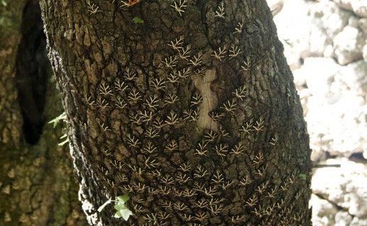 родосская долина бабочек фотография