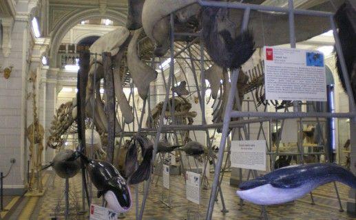 фотография зоологического музея Казанского университета