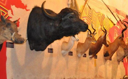 фото экспонатов Музея природы в Череповце