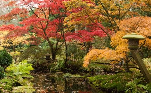 фотография гаагского парка Клингендаль