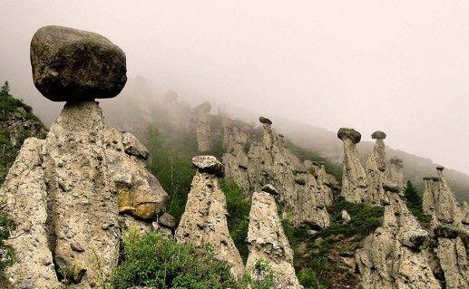 фото грибов Ак-Курум в Горном Алтае