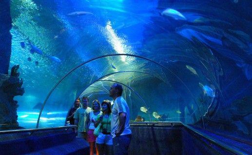 Океанариум «Подводный мир Винперл» фото