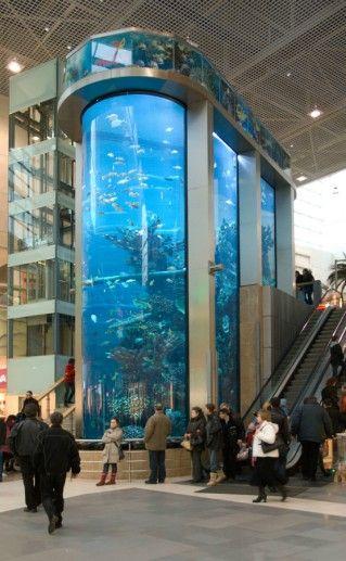 Фотография аквариум Каунаса