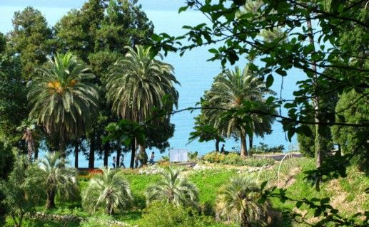 Батумский ботанический сад фотография