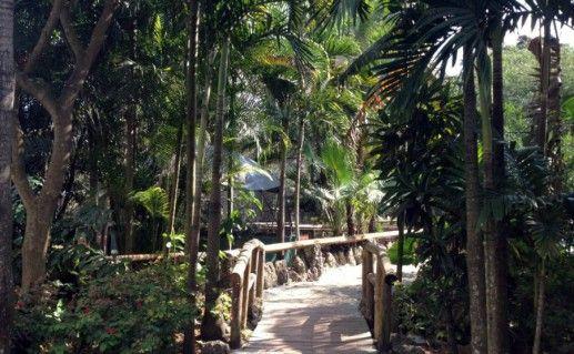 Фотография джунгли обезьян