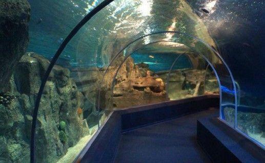 Океанариум в Адлере фото