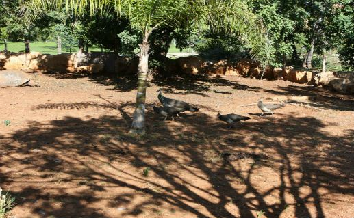 Фото парк птиц в Пафосе