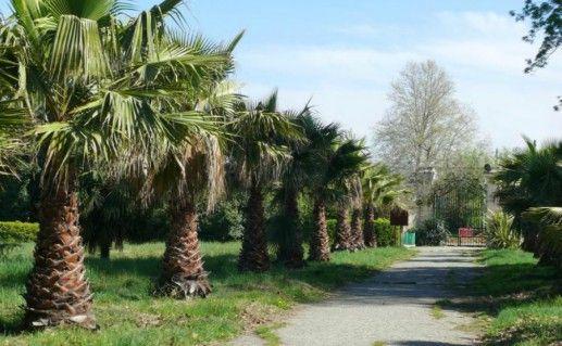 Фотография парк «Южные культуры»