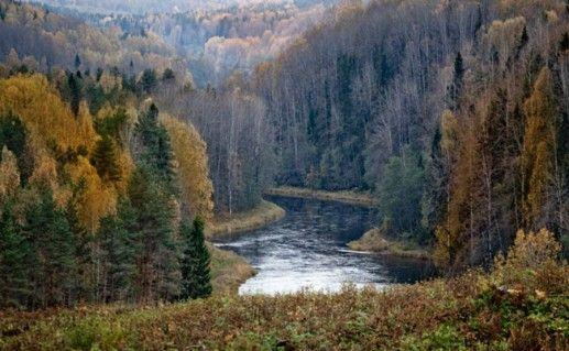 Природный парк «Вепсский лес» фото