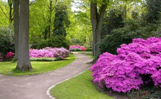 Рододендроновый парк фотография