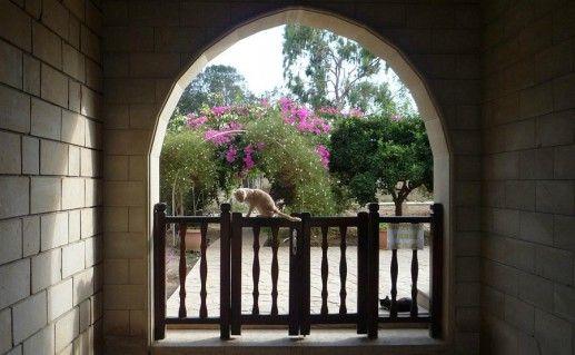 Кошачий монастырь в Лимасоле фото
