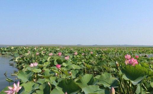 Долина лотосов в Краснодарском крае фото